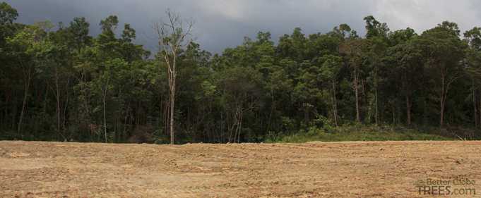 Deforestation in Borneo Island, Indonesia