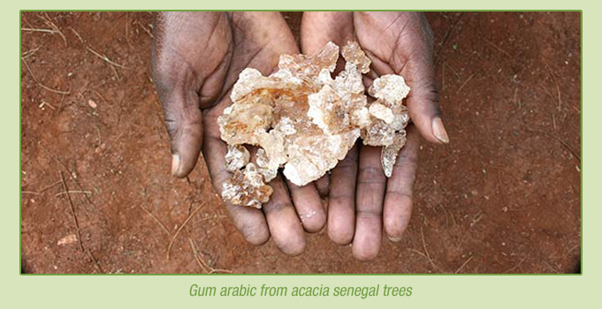 Gum arabic from Acacia senegal trees