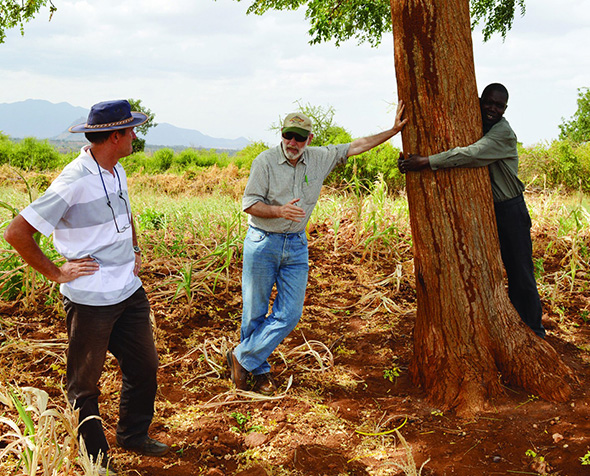 Commercial potential of a Kenyan dryland mahogany, mukau - Melia volkensii