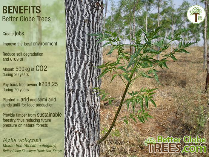 Mukau Tree Benefits