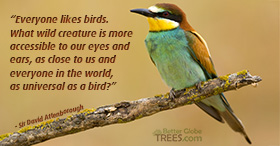 Everyone likes birds. What wild creature is more accessible to our eyes and ears, as close to us and everyone in the world, as universal as a bird?