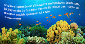 Coral reefs represent some of the world