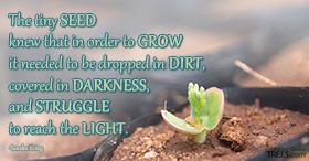 The tiny seed knew that in order to grow it needed to be dropped in dirt, covered in darkness, and struggle to reach the light.