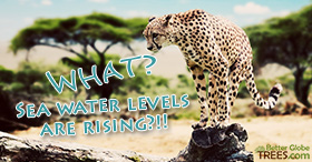 WHAT? Sea water levels are rising?!!